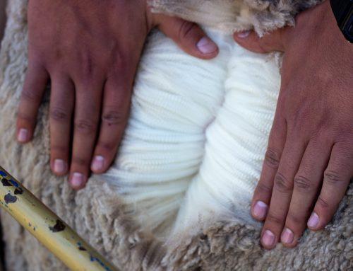 Wool Market Report – 9 September 2020