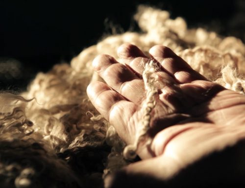 Mohair Market Report: 24 November 2020