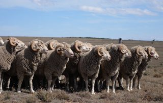 wool-market-report
