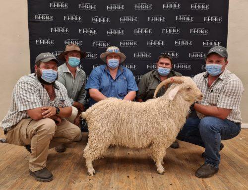 Graaff-Reinet Angora Ram Auction